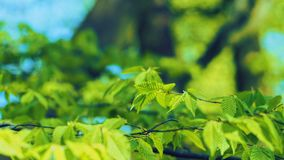 Selective Focus Photography of Green Leaves stock image