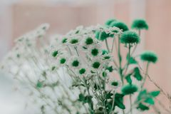 Selective Focus Photography of Green and White Petaled Flowers Royalty Free Stock Photography