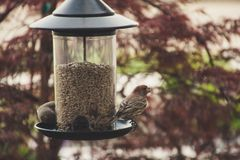 Selective Focus Photography of House Finch Perched on Bird Feeder Stock Photos