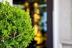 Selective Focus Photography of Ixora Plant Stock Photography