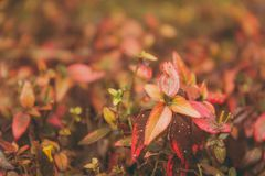 Selective Focus Photography of Leaves stock photos