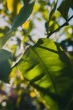 Selective Focus Photography of Leaves stock photography