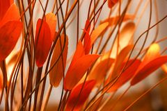 Selective Focus Photography of Orange Petaled Flowers Royalty Free Stock Photos