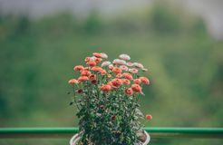 Selective Focus Photography of Orange Petaled Flowers Stock Image