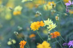 Selective Focus Photography of Orange, Yellow, and Purple Flowers Royalty Free Stock Images