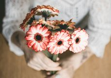 Selective Focus Photography of Person Holding Red Petaled Flowers Stock Photography