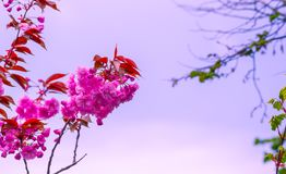 Selective Focus Photography of Pink Flowers Royalty Free Stock Photo