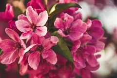 Selective Focus Photography of Pink Flowers Stock Image