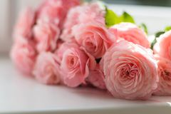 Selective Focus Photography of Pink Peony Flowers Royalty Free Stock Photos