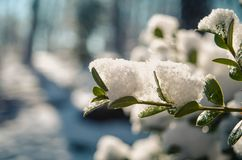 Selective Focus Photography of Plant Covered with Snow royalty free stock photos