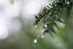 Selective Focus Photography of Plant With Dew royalty free stock photography