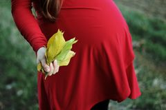 Selective Focus Photography of Pregnant Woman Holding Bundle of Leaves stock photos