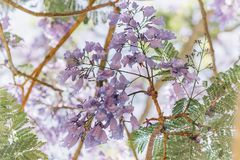 Selective Focus Photography of Purple Clustered Flowers Royalty Free Stock Image