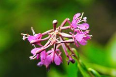 Selective Focus Photography of Purple Petal Flowers Royalty Free Stock Photo