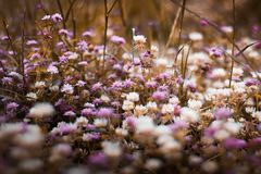 Selective Focus Photography of Purple and White Bed of Flowers Stock Photos