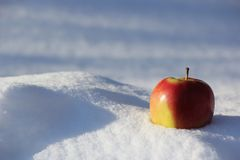 Selective Focus Photography of Red Apple on Snow Royalty Free Stock Photography
