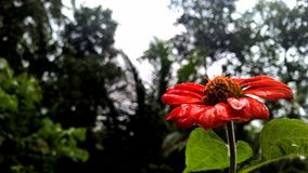 Selective Focus Photography of Red Petaled Flower Royalty Free Stock Photo