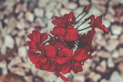 Selective Focus Photography of Red Petaled Flowers Stock Photo