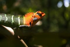 Selective Focus Photography of Reptile Clinging on Tree Branch