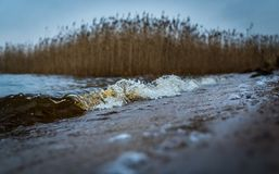 Selective Focus Photography of Sand Near Body of Water Royalty Free Stock Image
