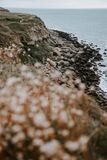 Selective Focus Photography of Seashore With Stones Near Sea royalty free stock image