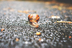 Selective Focus Photography of Snail on Grey Asphalt Road during Daytime Royalty Free Stock Photos