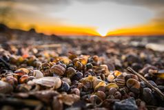 Selective Focus Photography of Snail Shells royalty free stock photography