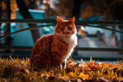 Selective Focus Photography of a Tabby Cat stock images