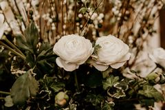 Selective Focus Photography of Two White Petaled Flowers stock photography