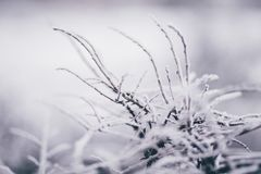 Selective Focus Photography of Weed Covered by Snow royalty free stock photo