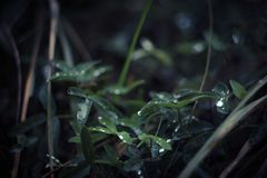 Selective Focus Photography of Wet Leaves royalty free stock images
