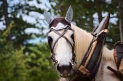 Selective Focus Photography of White Horse Stock Photos