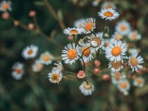 Selective Focus Photography of White-and-orange Petaled Flower Plant stock image