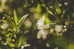Selective Focus Photography Of White Petaled Flower stock photos