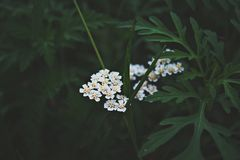 Selective-focus Photography Of White Petaled Flowers Stock Photo
