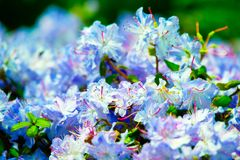 Selective Focus Photography of WhiteFlowers stock photo