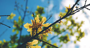 Selective Focus Photography of Yellow Leaf Tree during Daytime Under Blue Sky Stock Images