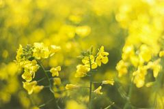 Selective-focus Photography of Yellow Petaled Flowers Stock Image