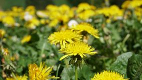 Selective Focus Photography of Yellow Petaled Flowers royalty free stock photography
