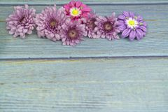 Selective focus at  pink flower for background and greeting card royalty free stock photos