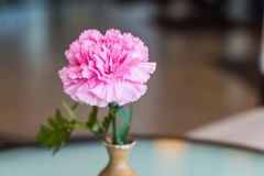 Selective focus with pink flower in a vase, beautiful flower. Royalty Free Stock Images