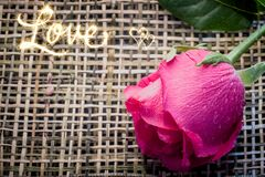 Selective focus on Pink rose on wood weave with soft light backg Royalty Free Stock Photography