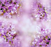 Selective focus on purple flower. Beautiful nature in meadow Royalty Free Stock Photography