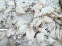 Selective focus of rab squid clean in the fish market, seafood on ice. Squid abstract background, Close up raw sea Cuttlefish use for cook, above view stock photos