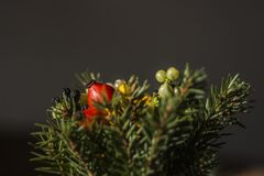 Selective Focus of Red and Green Berries Fruit Royalty Free Stock Photos