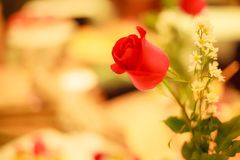 Selective focus Red Rose Flower decoration on romantic dinner table in special occasion concept with blurred background Stock Photography