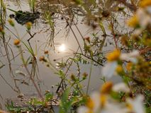 Reflection of the sun in a paddy field`s water in the hot afternoon in the rural area of Chiang Mai, Thailand. Selective focus of reflection of the sun in a stock photo