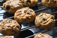 Selective focus with shallow depth of field on home made cookies Stock Photos