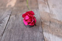 Selective focus and shallow depth of field of one red rose on old wooden background. Valentine`s day or romance concept Stock Images