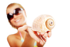 Selective focus on the shell Royalty Free Stock Photo